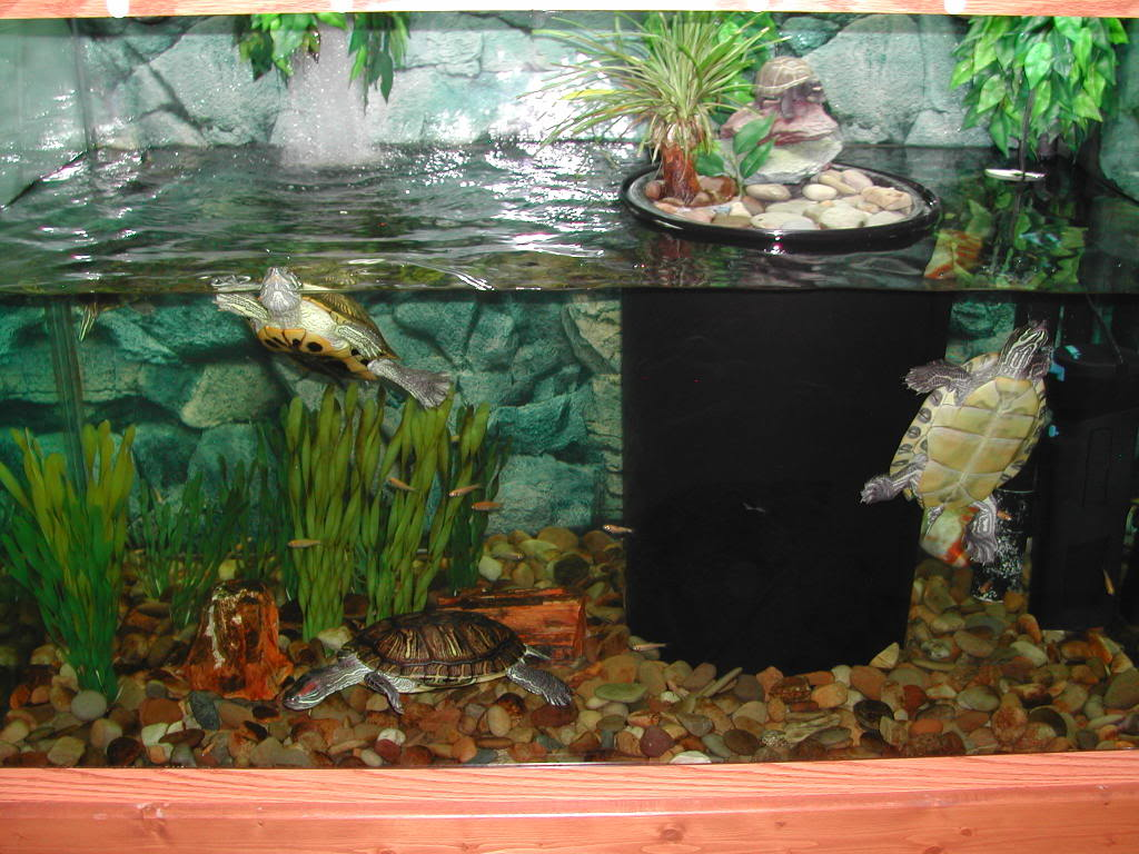 Turtle Tank Decor Turtles Raising 5 Kids With Disabilities And Remaining Sane Blog